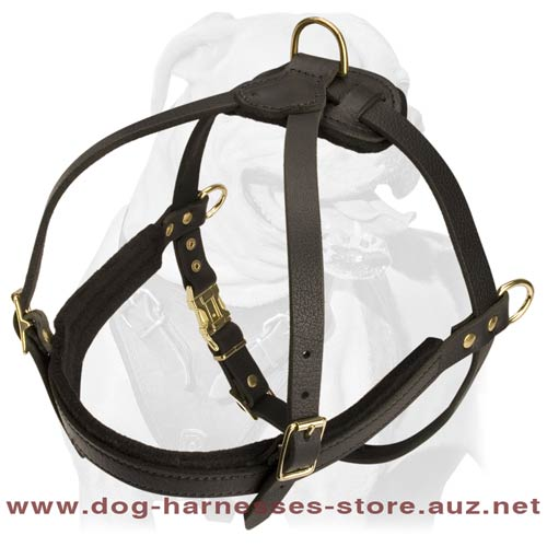 Bloodhound leather  dog harness- padded leather dog harness for bloodhound  breed