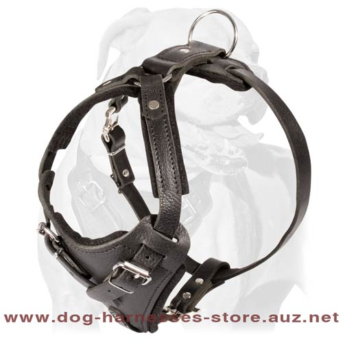 Grand Leather Dog Harness
