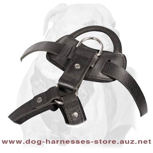 Leather Dog Harness Of A Multifunctional Use