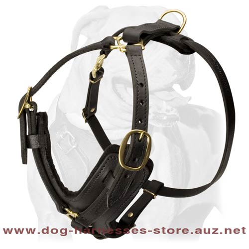 Fine Leather Dog Harness