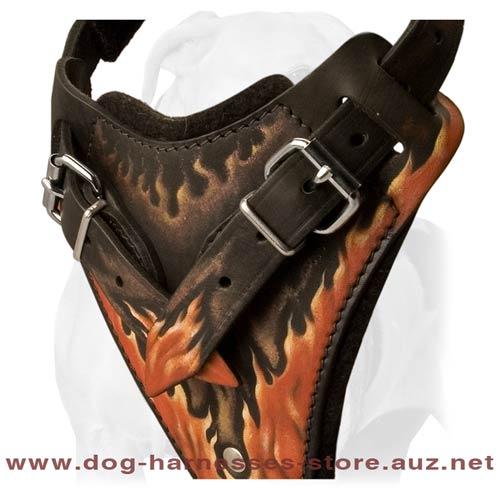 Unusual Leather Dog Harness