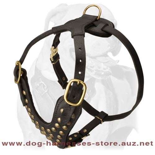 Astonishing Leather Dog Harness