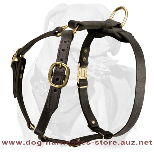 Stunning Leather Dog Harness