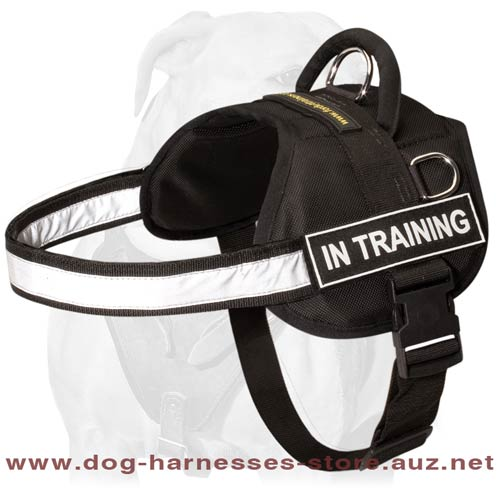 Perfect Quality Leather Dog Harness