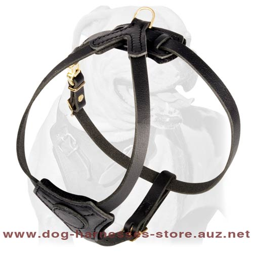 Simple Leather Puppy Harness
