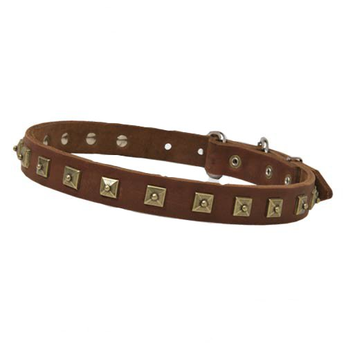 Luxury decorated leather dog collar with attractive brass studs