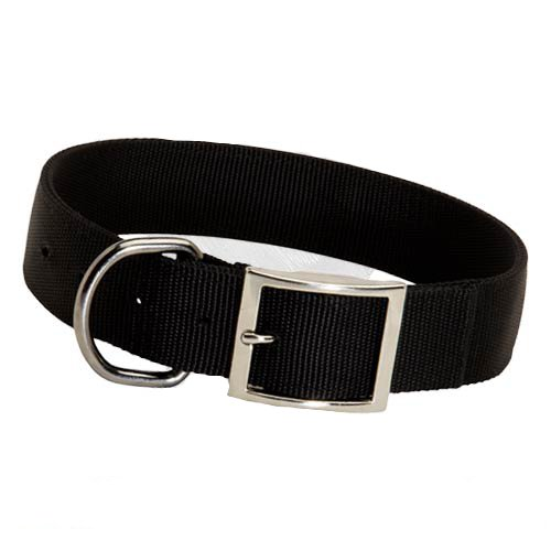 2ply nylon dog collar with D-ring