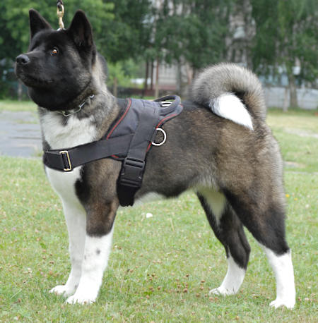 Adjustable Akita Nylon multi-purpose dog harness pulling-Japanese Akita