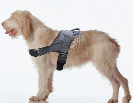 Spinone Italiano Adjustable Nylon dog harness with handle