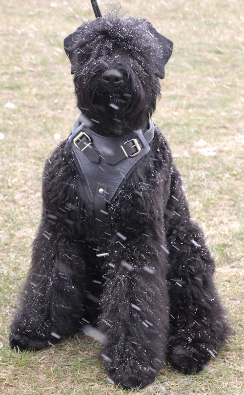 Adjustable Tracking,custom Leather Dog Harness for black russian terrier