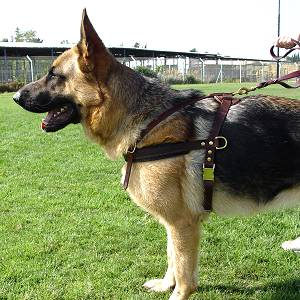 Dog Harnesses For Large Dogs To Stop Pulling