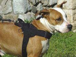 Adjustable Nylon dog harness for amstaff