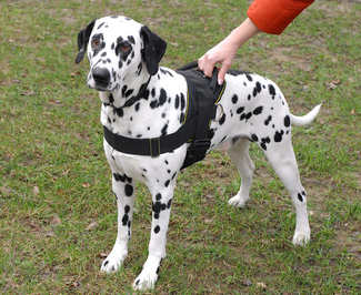 Adjustable Nylon dog harness for dalmatian breed
