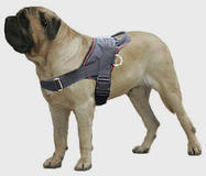 Large dog harness for English MAstiff click here