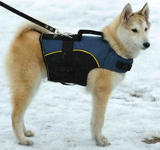 Siberian Husky coat - Nylon Dog Harness with handle for Husky