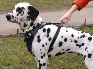 dog harness for dalmatians , walking dog harness