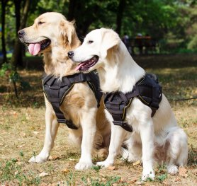 All About Dog Harnesses